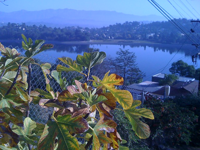 Fall in Silver Lake