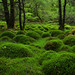 Mossy mounds, Sutherlands Grove Forest, Scotland