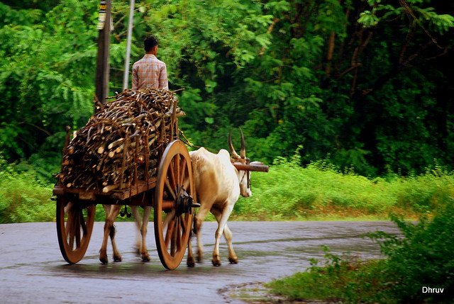 Bullock Carts Images Bullock Cart With Wooden