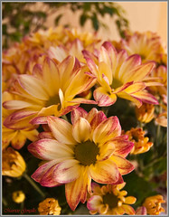 dahlia, flower arranging, flower, yellow, floral design, flora, flower bouquet, floristry, petal,