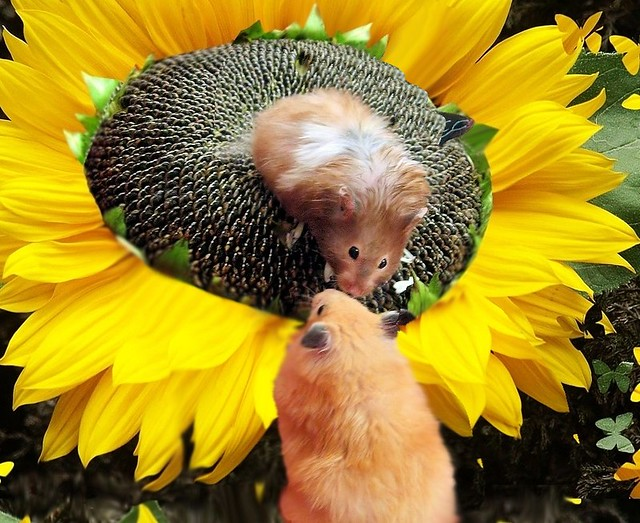 Sunflower Girls - Szarotka and Chmurka
