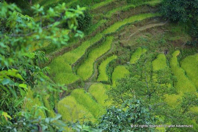 Rice Terraces - Annapurna Circuit Trek - Nepal