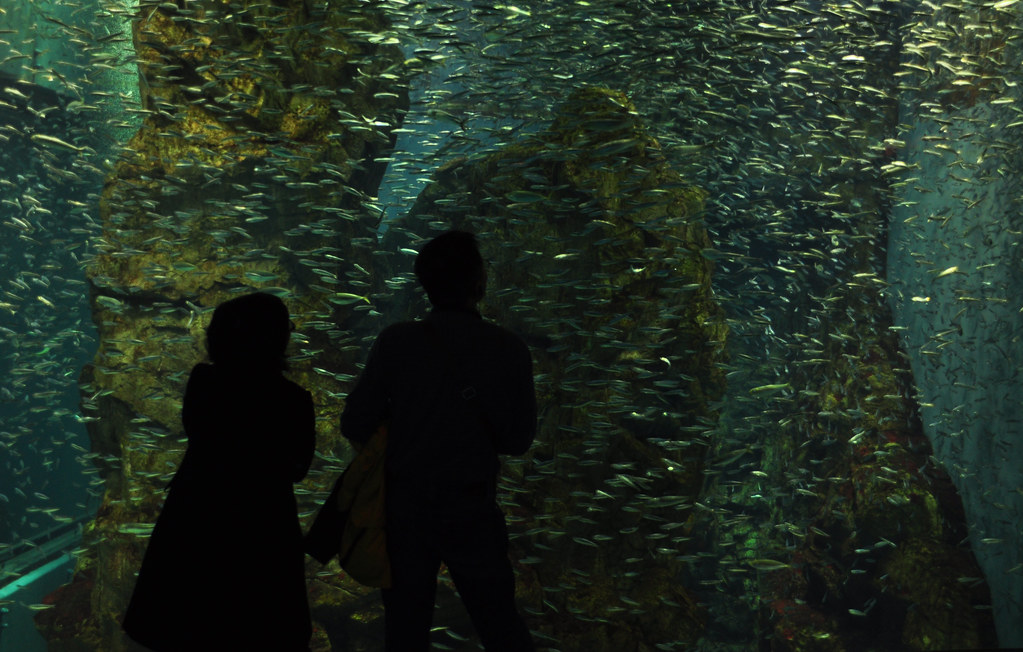 Osaka's aquarium