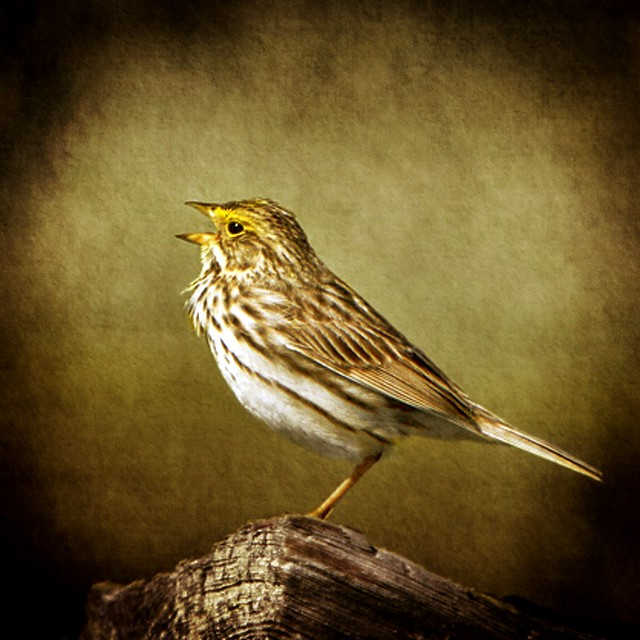 Raising Of Sparrow Pictures : Recent Photos The Commons Getty Collection Galleries World Map App ...