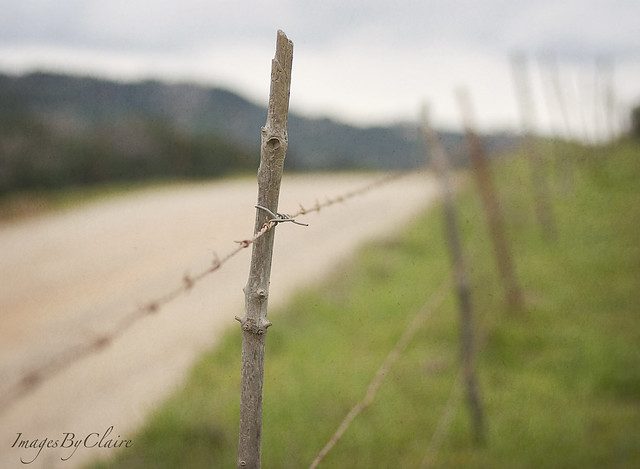 Fence friday...country road