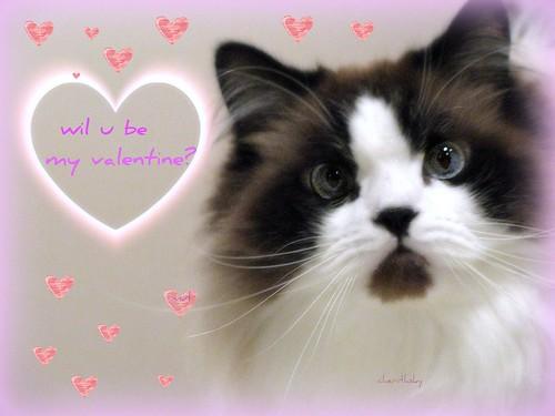 smitten kitten by cherithsky