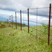 grass and fence wallpaper