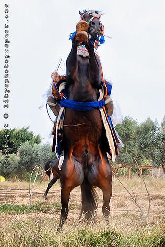 sunset horses horse sun set danger silhouettes knight شمس libya benghazi libia غروب ابراهيم libi تصوير libyen ليبيا líbia خيول リビア بنغازي libija 利比亞 nước либия العقوري לוב 리비아 ливия ลิเบีย lībija либија liibüa λιβύη лівія ליביאַ líbía лівійская арабская джамахірыя 利比亚 लीबिया