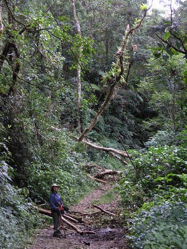 plants latinamerica forest landscapes parks panama centralamerica 2007 centroamerica veraguas américalatina gpsapproximate