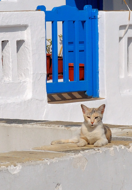 Cats in Greece #1: Mykonos