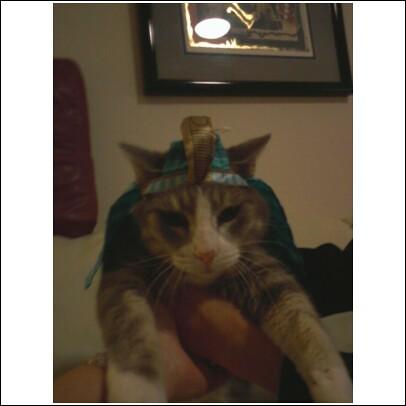 Cat Hats Travel Box