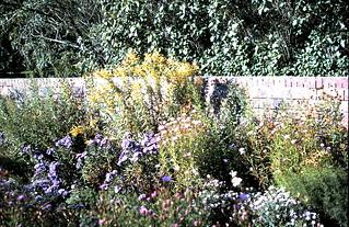 Mrs Martineau's garden