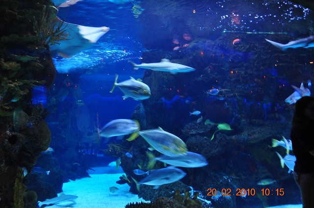Fish swimming in the aquarium in nashville flickr for What is the fastest swimming fish