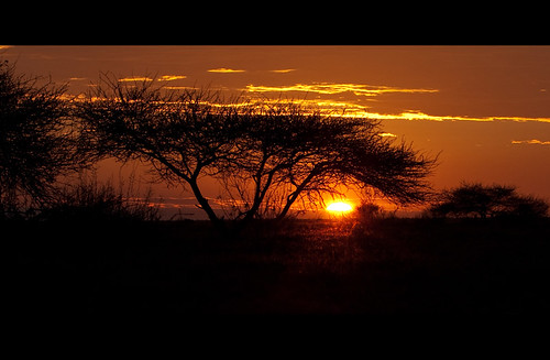 africa travel sunset sky tree nature clouds canon sonnenuntergang sundown wildlife urlaub natur himmel wolken adventure safari afrika botswana 2009 baum abenteuer nxaipan kwando canoneos40d toisóndeoro thomasretterath canonef70200mmlis28usm artistoftheyearlevel4