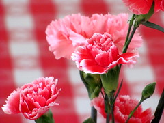 carnation, flower, floral design, red, plant, macro photography, flora, floristry, close-up, peony, dianthus, pink, petal,