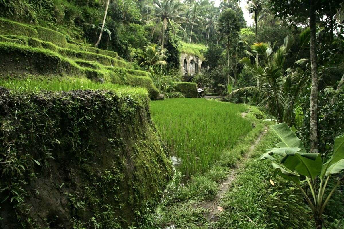 Ubud, Creative And Peaceful Place