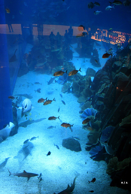 One Of The Largest Aquariums In The World Flickr Photo