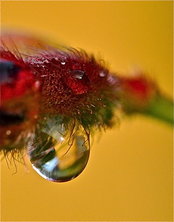 drop within a droplet within a......