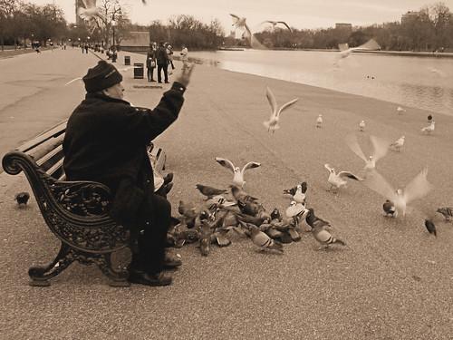 Londres - Hyde Park - O Homem e os pombos by Acyro