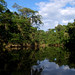 Oxbow lake, Yasuni