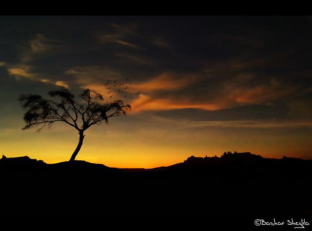 The Lonely Tree of Ténéré !