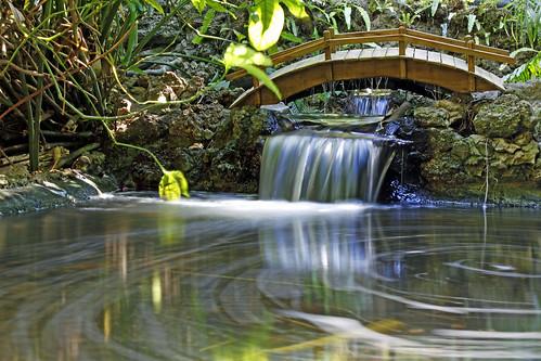 bridge nature water stpetersburg stream florida falls
