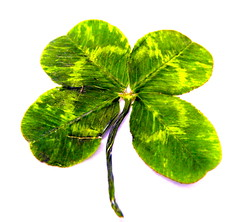annual plant, clover, leaf, plant, herb, green,