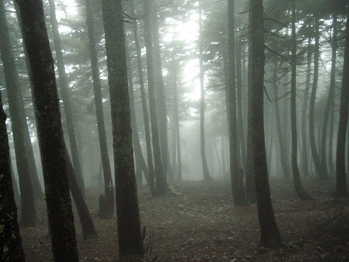 "Fog ""covers"" ... the forest !!"