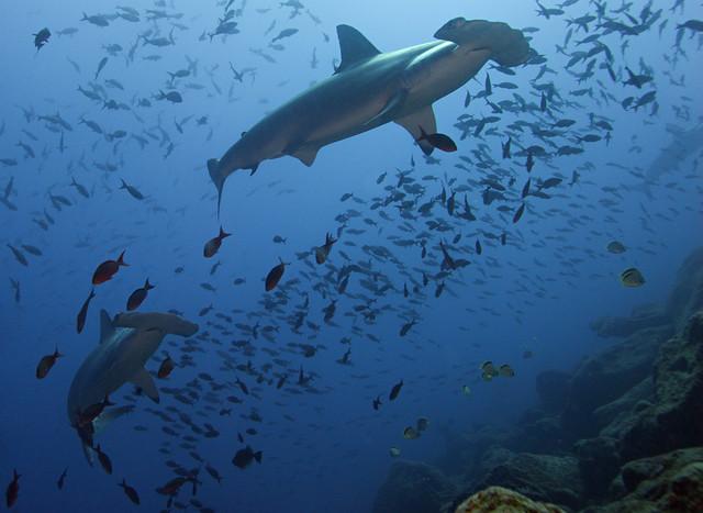 2008 Galapagos 05274