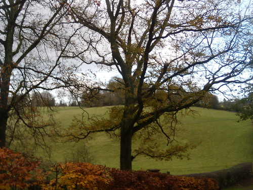 Tree with beech hedge and hill