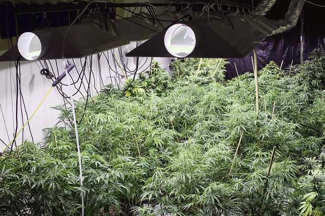 Grow House 095