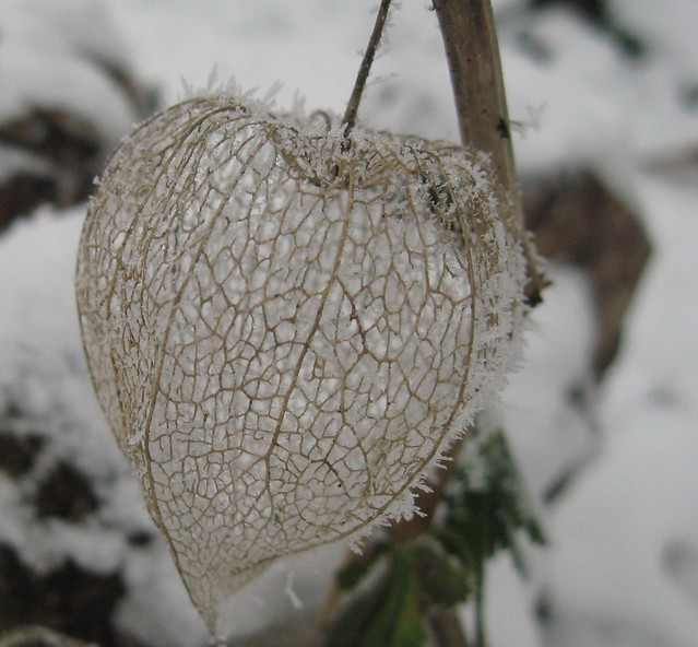 Winter heart - Cuore d'inverno