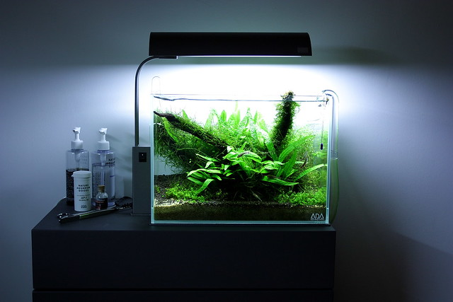 Cool planted fish tanks a gallery on flickr for Ada fish tank