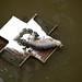 Small photo of Seal in London on a bird feeding platform