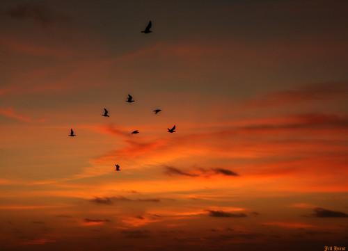 sunset sky españa orange birds atardecer flying spain dusk jill fuerteventura pajaros cielo silueta naranja canaryislands sillhouette islascanarias crepúsculo nwn volando elcotillo superlativas a3b majocesa