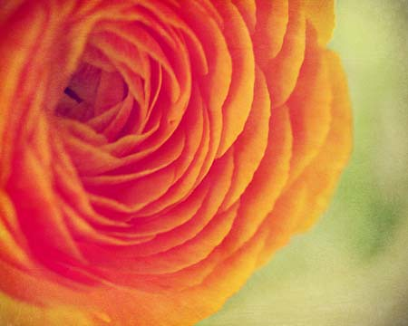 Bright Orange Bloom