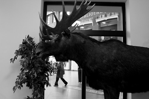 city light urban blackandwhite bw canada monochrome june statue photography photo flickr downtown noiretblanc pedestrian moose newbrunswick bayoffundy canondslr digitalimage decisivemoment marketsquare moosehead saintjohn 2011 contemporarylandscape sociallandscape topf25faves newbrunswickmuseum canoneos60d taxidermymoose avardwoolaver urbansociallandscape villedesaintjohn avardwoolaverphoto leefriedlanderinspiredby