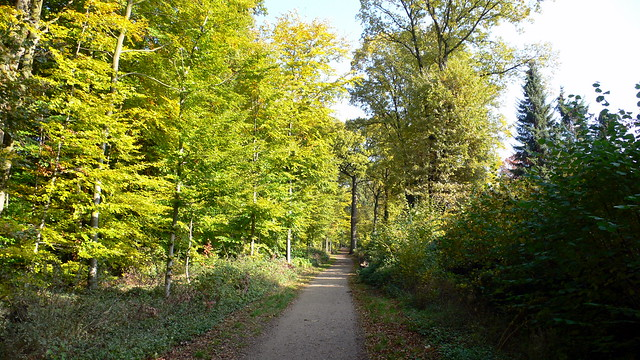 Wald in Meiendorf / Volksdorf