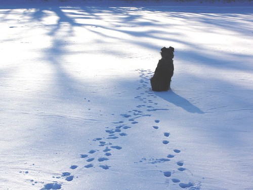 Cães e as Doenças de Inverno- Petlove - O Maior Petshop Online do Brasil