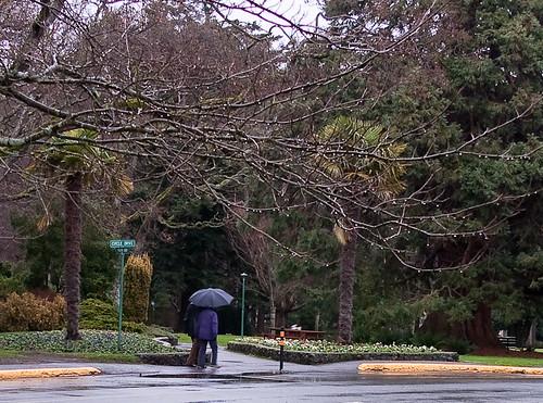 Beacon Hill Park in the rain