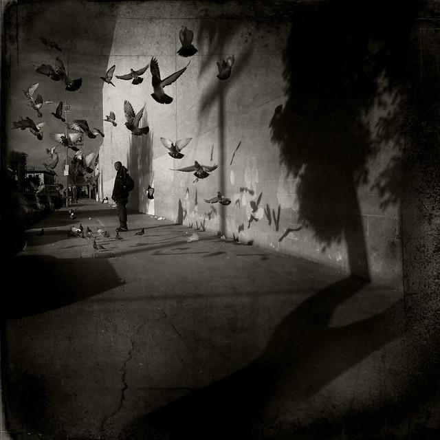 LJ. - Haiti Appeal: Pigeons & Shadows.