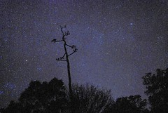 Century Stars