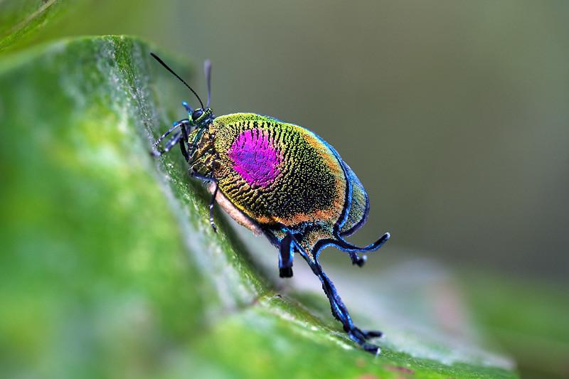Al  233 m de rara  considero esta uma das mais belas borboletas    Tropical Rainforest Butterflies