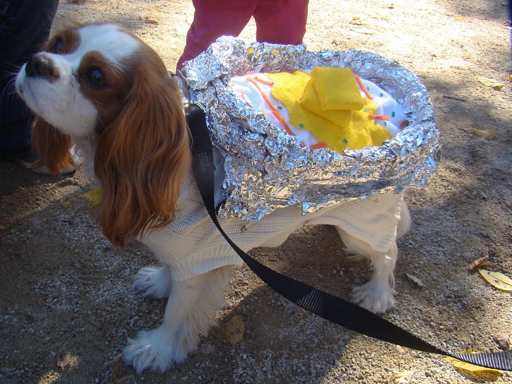 Baked potato dog a photo on flickriver baked potato dog solutioingenieria Image collections
