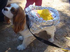 baked potato dog