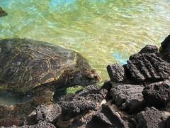 Sea turtle rehab