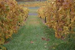 Bluemont Vineyard Vines 7