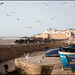 boats and seagulls - Essaouira by Maciej Dakowicz
