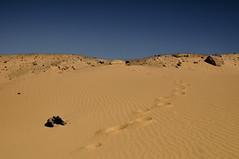 Western Desert Sand
