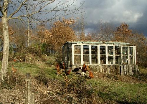 Forum francophone de permaculture • Consulter le sujet ...